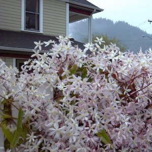 Spring at The Painted Lady B & B in Myrtle Creek, Oregon.